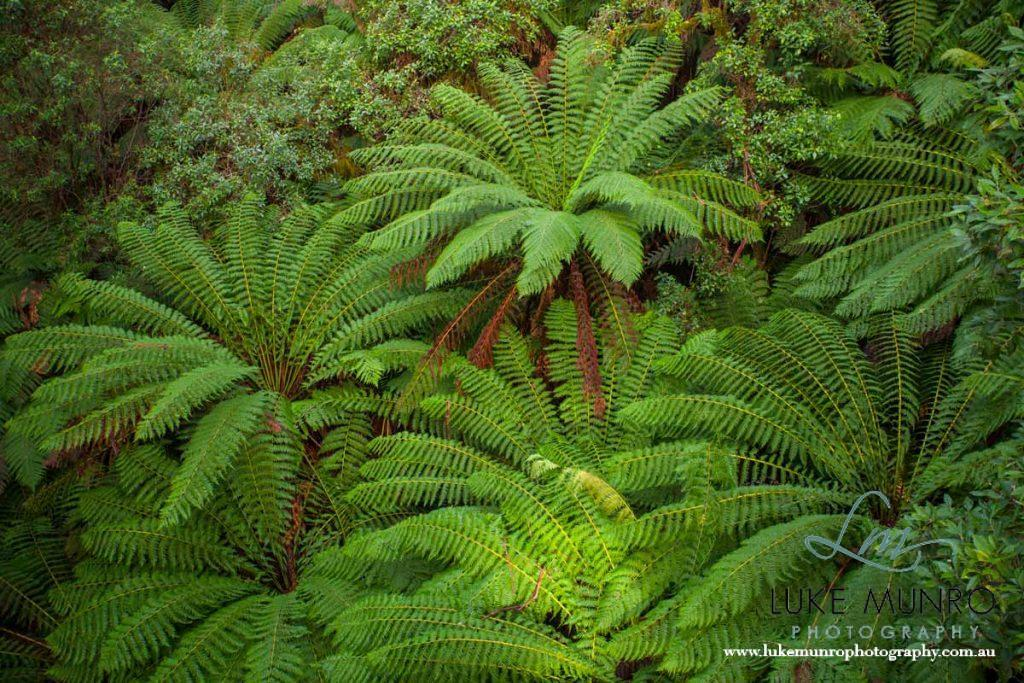 Fern Gully - Otway National Park